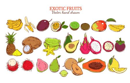 Colored fresh natural exotic fruits set with organic tropical products in hand drawn style isolated vector illustration Illustration
