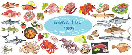 Colorful Drawing Marine Food Collection Illustration