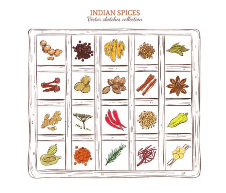 Colored Sketch Indian Spices Set Ilustração