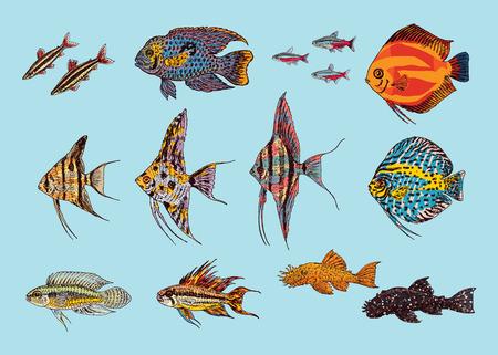 Beautiful Aquarium Fishes Collection Illustration