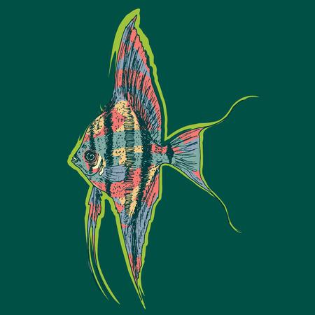 pterophyllum: Graphic Aquarium Scalar Or Angelfish Concept Illustration