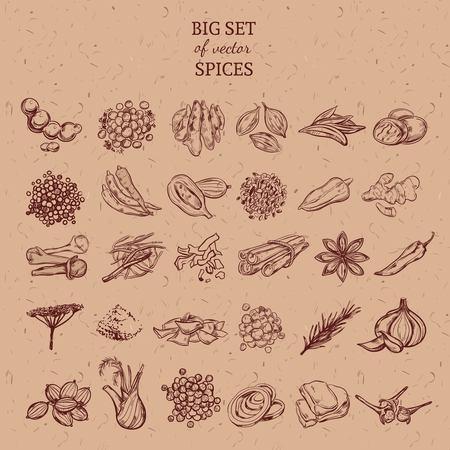 Colección de hierbas y especias naturales