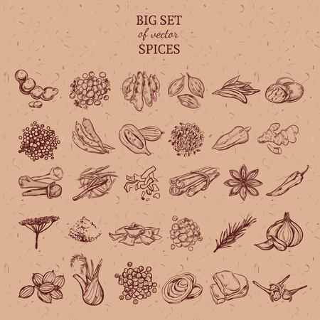 Natural Spices And Herbs Collection Illustration