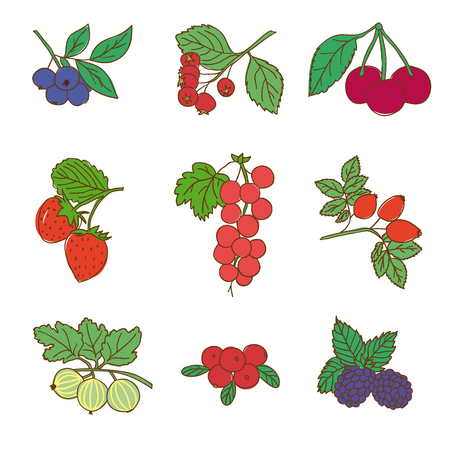 Colored Graphic Natural Food Set Illustration