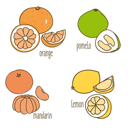 Colored Drawing Citrus Fruits Collection