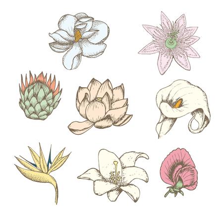 Colored drawing botanical exotic flowers set with protea magnolia passiflora lathyrus strelitzia calla white lily isolated vector illustration Ilustracja