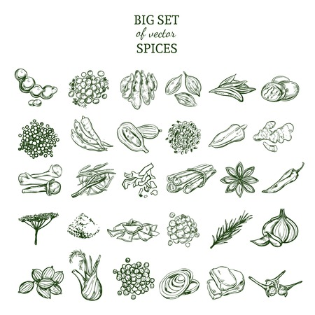 Hand drawn organic spices set with natural herbs and plants in green color isolated vector illustration Illustration