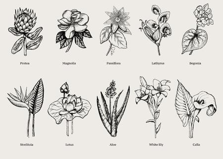 Plantes exotiques dessinés à la main sertie de fleurs tropicales naturelles en illustration vectorielle de style vintage isolé