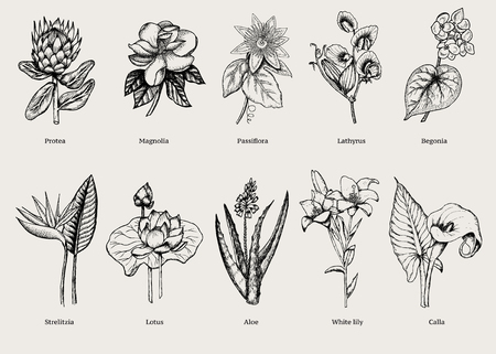 Hand drawn exotic plants set with natural tropical flowers in vintage style isolated vector illustration Illustration