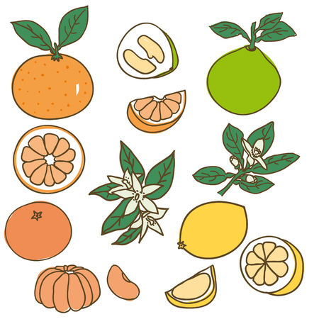 Colored Drawing Organic Food Collection Иллюстрация
