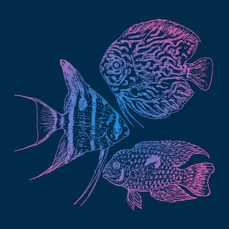 pterophyllum: Graphic Aquarium Fishes Set Illustration