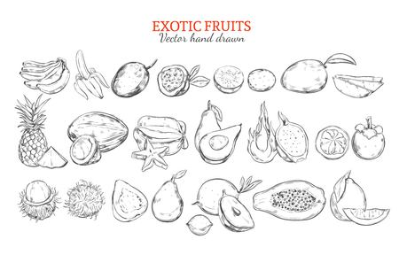 Monochrome exotic and tropical fruits collection in hand drawn style isolated vector illustration.