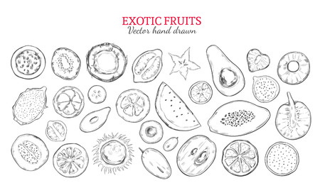 Exotic fruits and tropical berries set in monochrome hand drawn style isolated vector illustration Illustration