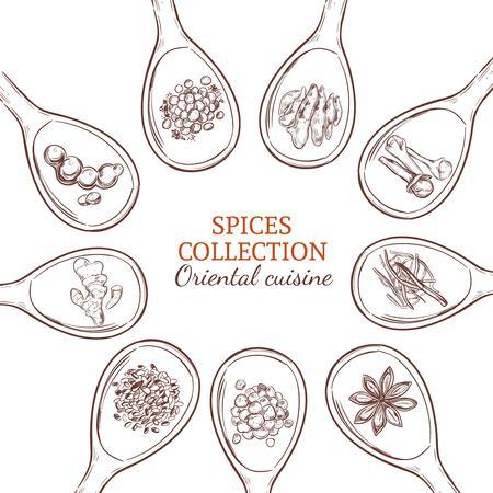 Schetskruiden en kruiden om concept met voedselkruideniers en specerijen op lepels geïsoleerde vectorillustratie