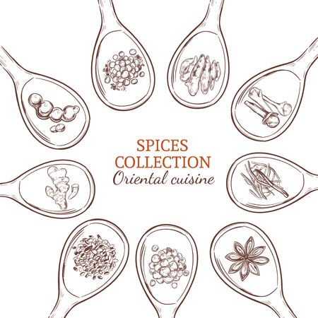 Sketch spices and herbs round concept with food seasonings and condiments on spoons isolated vector illustration