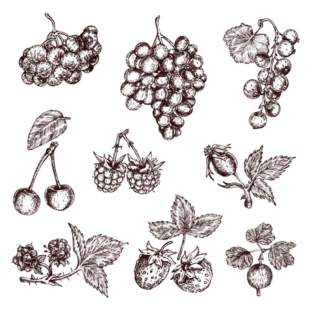 Berries Hand Drawn Monochrome Set 版權商用圖片 - 81124350