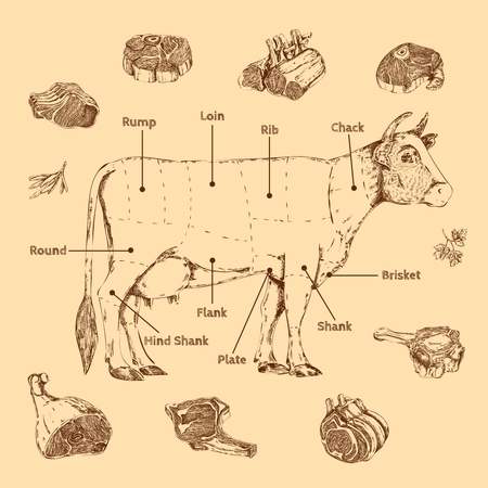 Meat hand drawn scheme of butchering beef with cow and herbs lettering vector illustration