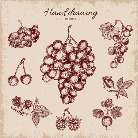Berries hand drawn design including grapes rowanberry black currant and cherry on beige vector illustration