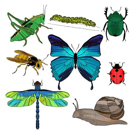 Kleurrijke tekening insecten collectie Vector Illustratie