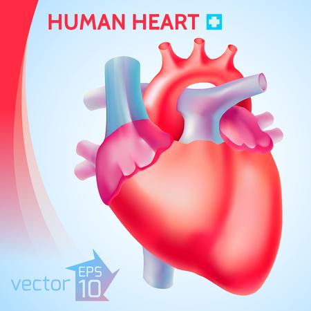 Healthy Organ Background Ilustração