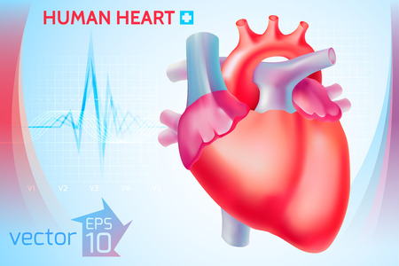 Medical healthy template with colorful human heart on light blue background vector illustration Illustration