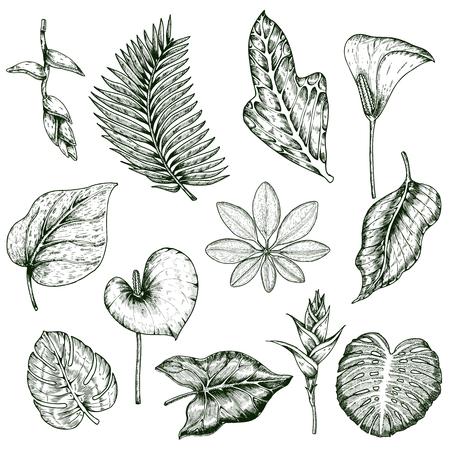Hand drawn tropical plants monochrome set.