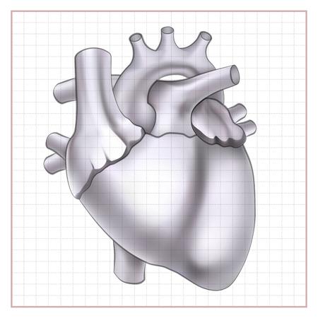 Medical Organ Template