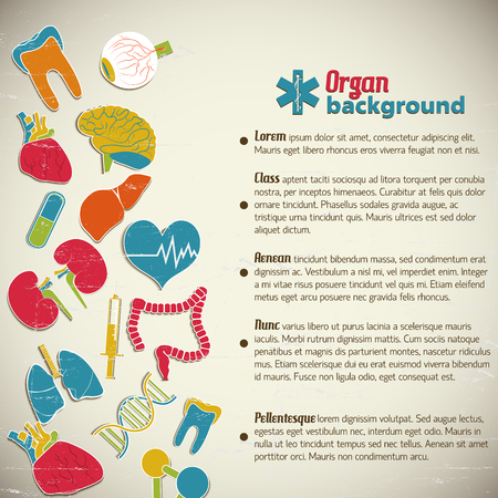 Human organs background