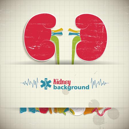 Flat Kidney Background
