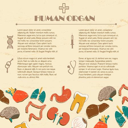 Human organs illustration.
