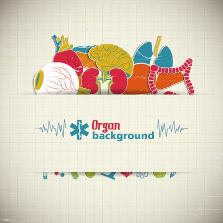 Menselijke organen pictogram.