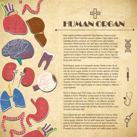 Medical concept with human organs