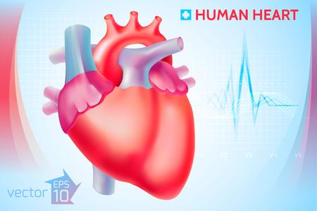 Medical Anatomical Cardio Template Illustration