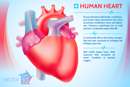 Medical Organ Poster