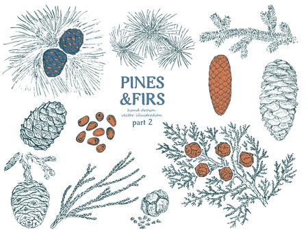 Skizze der Tanne Elements Collection Standard-Bild - 88193134