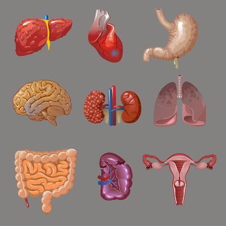 Cartoon Internal Human Organs Collection Ilustrace