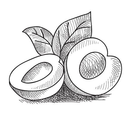 Hand Drawn Peach Concept Фото со стока