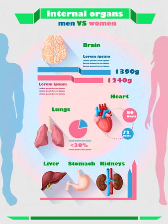 Human Internal Organs Infographic Template Illustration