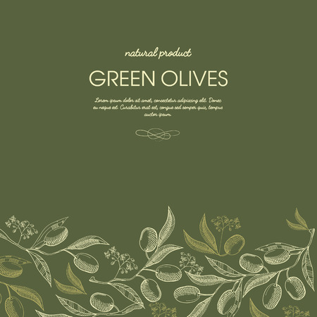 Abstract sketch floral template with olives tree branches in vintage style on green background vector illustration. Ilustrace