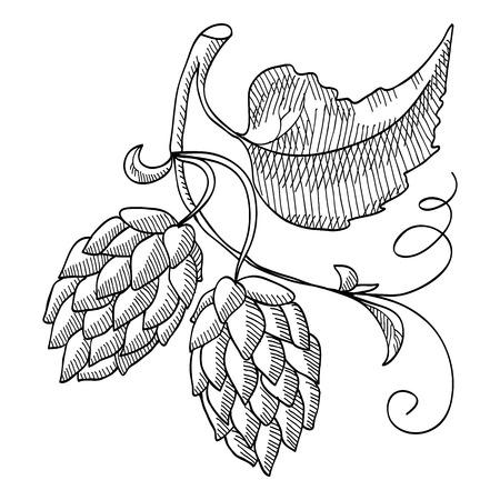 Sprig Of Hop Decorative Sketch vector illustration