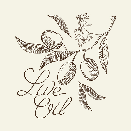 Twig of olive decorative sketch with sprouts and leaves. Hand drawn cartoons vector illustration.