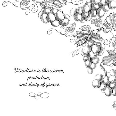 Corner frame elegant scroll ornament engraving grape bunches border hand drawn sketch vector illustration