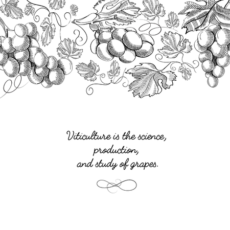 Decorative grapes design with inscription that viticulture is science, production and study of grapes vector illustration