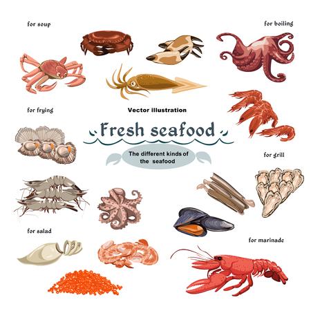 海洋生物コレクションのカラフルなスケッチ