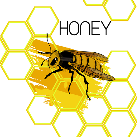 Hand drawn natural honey template with bee vector illustration