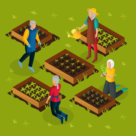 Isometric pensioners working in garden template with retired people growing and cultivating different plants vegetables vector illustration