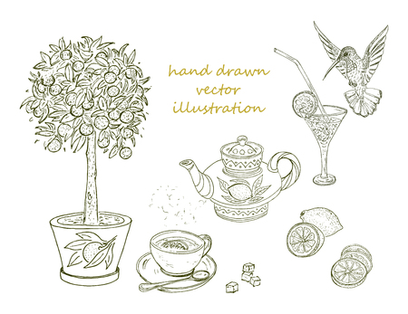 Hand drawn citrus elements set with orange tree tropical cocktail lemon humming bird teapot cup of tea isolated vector illustration Illustration
