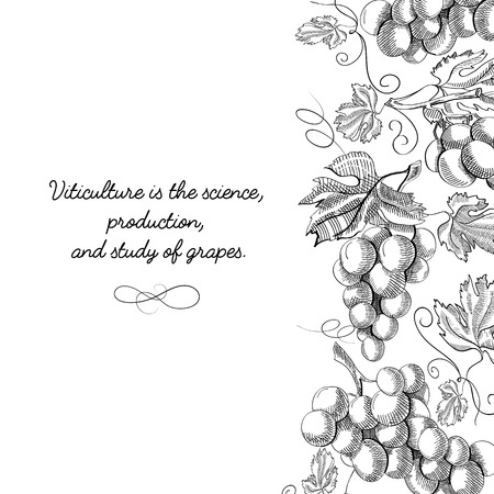 Typography design original card doodle with inscription that viticulture is science, production and study of grapes