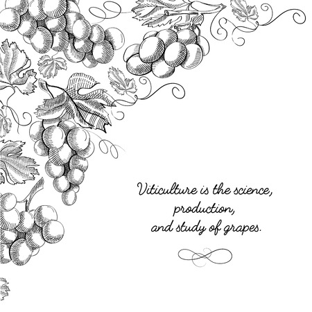 Typography design card doodle with inscription that viticulture is science, production and study of grapes vector illustration
