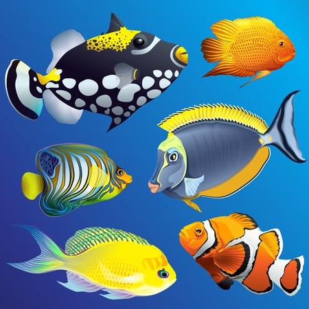 Faune sous-marine marine exotique réaliste sertie de différents poissons tropicaux sur bleu Vecteurs